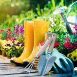 Expert In Gardening